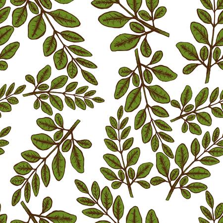Moringa Leaves Seampless Pattern Background. Vector illustration Stock Illustration - 92045134