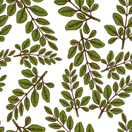 Moringa leaves pattern design. Stock Vector - 91776558