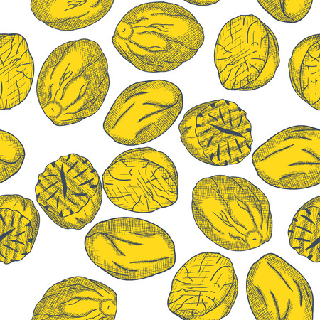 Hand Drawn Nutmeg Seamless Pattern Engrave Sketch. Vector illustration