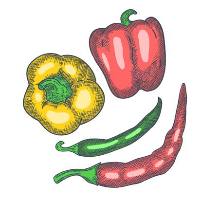 Pepper Hand Drawn Sketch Vintage Engrave Style. Vector illustration Illustration