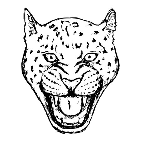 Amur Leopard Roar face or head. Hand drawn Leopard Head animal or predator isolated on white background. Vector