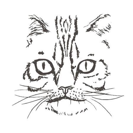 Hand Drawn Cat Face. Cat Head. Vector