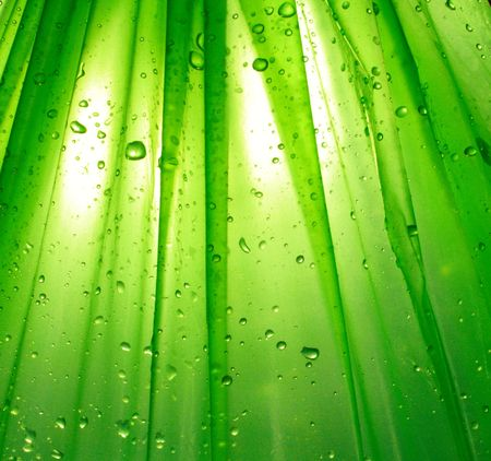 extreme macro: green background with water drop Stock Photo