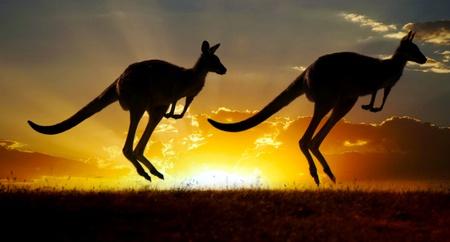 Sunset canguro australiano Outback serie Archivio Fotografico