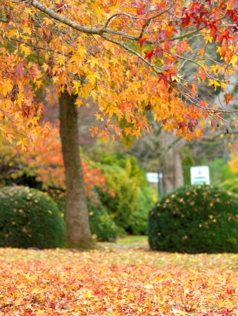 Goldener Herbst Garten an die Stadt Olinda, Australien Standard-Bild - 13814205