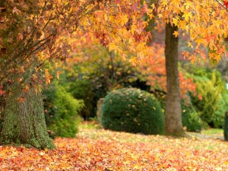 Golden autumn garden on the town of Olinda, Australia Standard-Bild