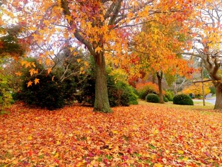 Goldener Herbst Garten an die Stadt Olinda, Australien Standard-Bild - 13814220
