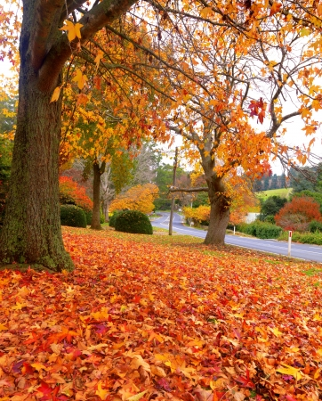 Golden autumn garden on the town of Olinda, Australia photo