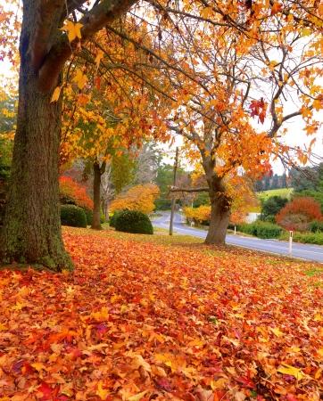 Golden autumn garden on the town of Olinda, Australia Stock Photo