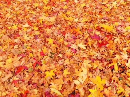 Autumn leaves Standard-Bild - 13814204