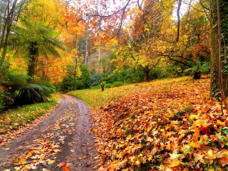 Autumn on the country road Australia photo