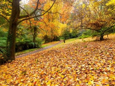 Goldener Herbst Garten an die Stadt Olinda, Australien Standard-Bild - 13814221