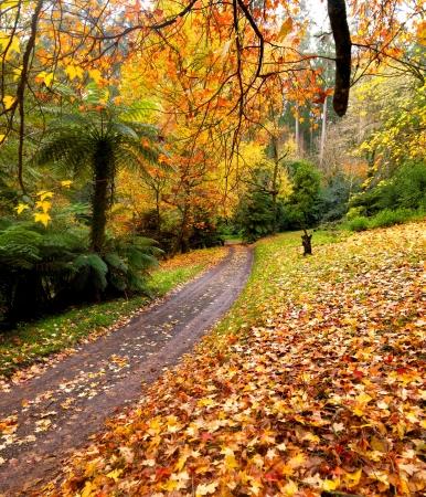 Autumn on the country road Australia