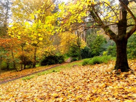 Goldener Herbst auf die Stadt Olinda, Australien Standard-Bild - 13814206