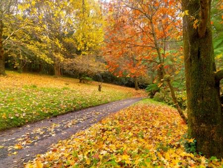 Herbst auf der Landstraße Australien Standard-Bild - 13814219