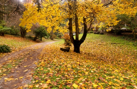 Goldener Herbst Garten an die Stadt Olinda, Australien Standard-Bild - 13814218