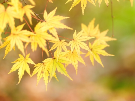 Goldene Blätter im Herbst Standard-Bild - 13814198