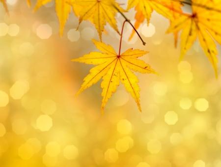 Goldene Blätter im Herbst Standard-Bild - 13814197