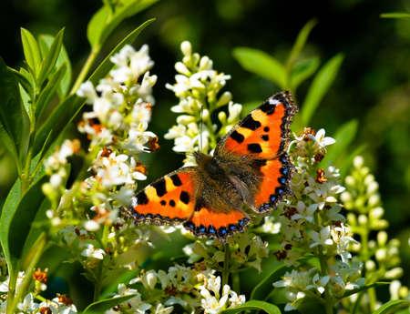 wingspread: Butterfly wingspread