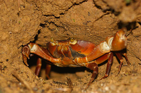 eyes cave: rainforest crab Stock Photo