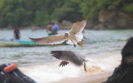 frenzy: Seagull feeding frenzy