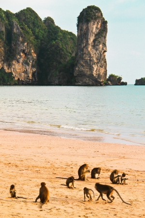 crazy monkey a Ao nangt beach Krabi  Thailand  Stock Photo