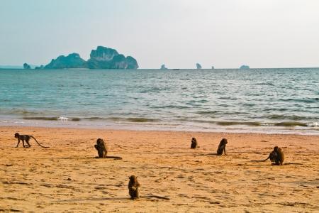 monkey chillout on Ao nang beach Krabi Thailand Stock Photo