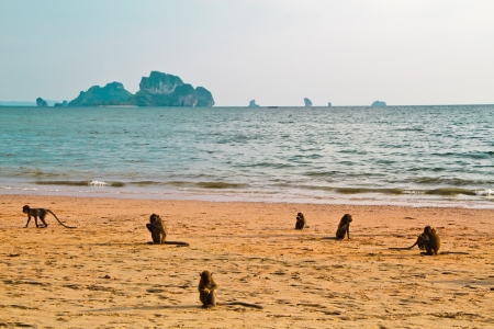 chillout: monkey chillout on Ao nang beach Krabi Thailand Stock Photo