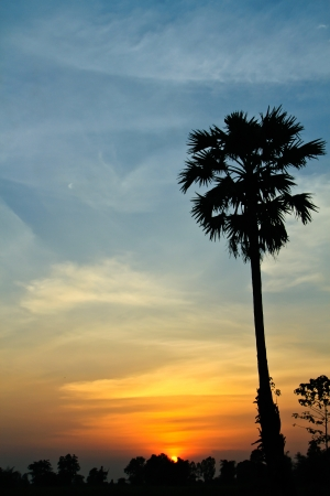 View of sunset with palm sugar tree at the countryside photo