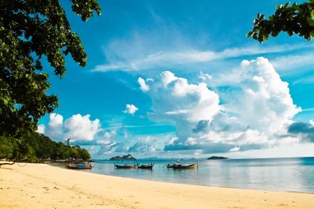 phi phi island: beautiful beach at phi phi island Thailand