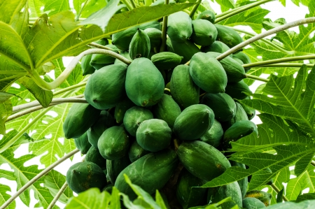 green papayas