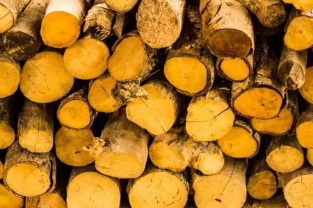 Firewood Stock Photo - 15222273