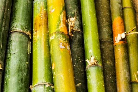 different colour of bamboo photo