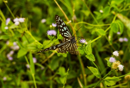 Butterfly with purple and white flower in the park photo