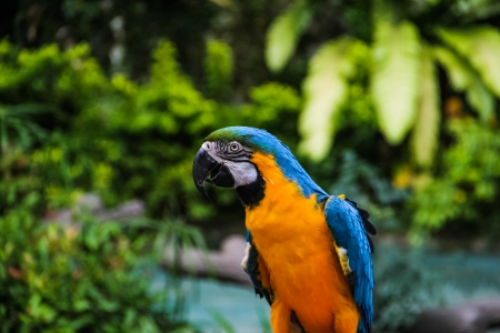 Yellow blue macaw with green trees background Stock Photo - 17104584