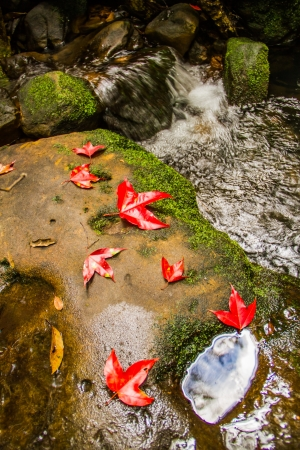 waterfall with red maple leaf and rock Stock Photo