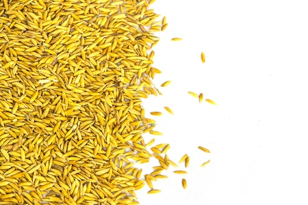 the golden paddy texture on white background Stock Photo