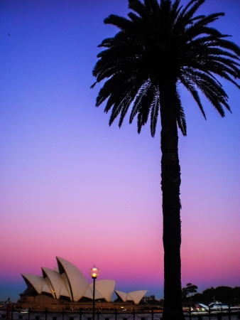 Sydney opera house with palm tree and pink and blue  sky Editorial