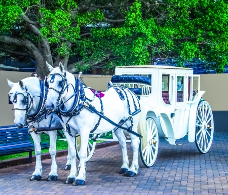 White horses carriage in vintage style waiting for pic up service photo