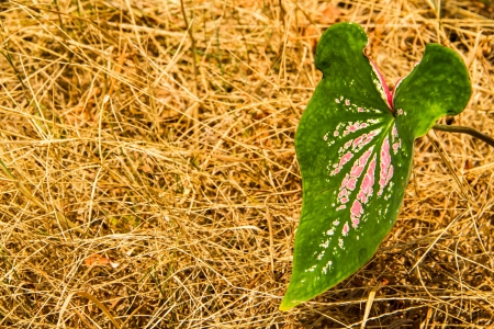 grasses: green and pink pattern leaf with dry grasses background Stock Photo
