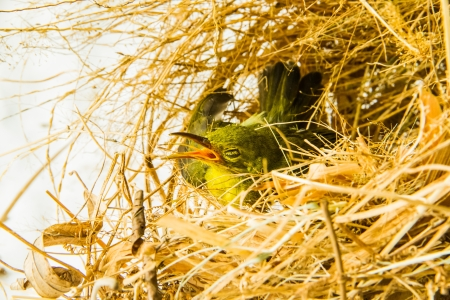 green small bird in the dried glasses nest photo