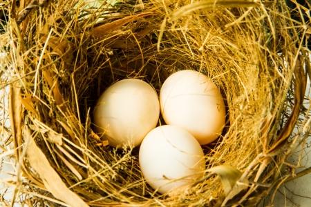 arbol de pascua: tres huevos en el nido en el fondo blanco Foto de archivo