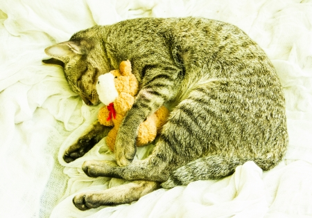 The cat sleeping with a toy beside. photo