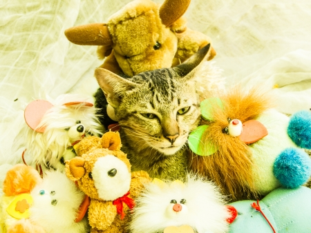 The lovely  cat  with various toys around. photo