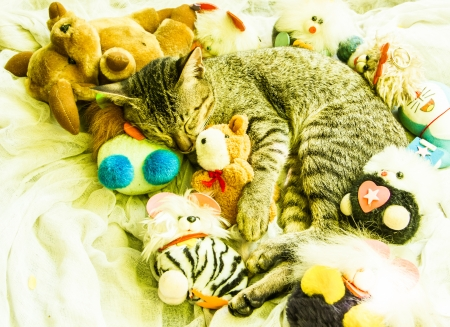The cat sleeping with various toys around. photo