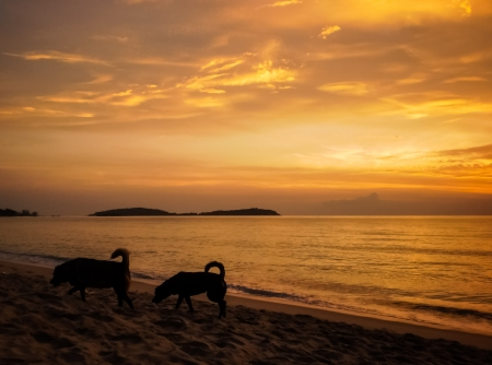 Two dogs walking on the beach in the evening. photo