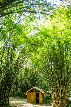 Little bamboo house in the forest  photo