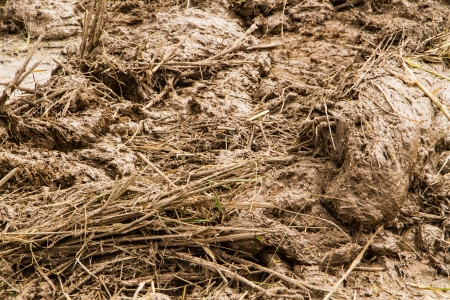mud pit: Dirty mud mix with straw in the rice field  Stock Photo