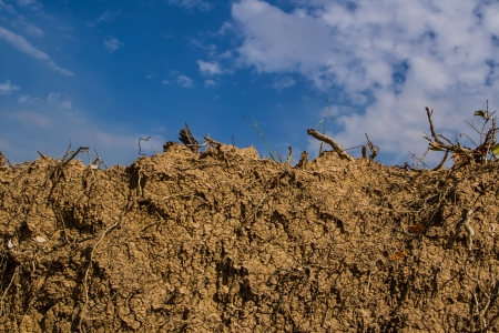 Dry earth ground mix with tree roots on sky background. photo