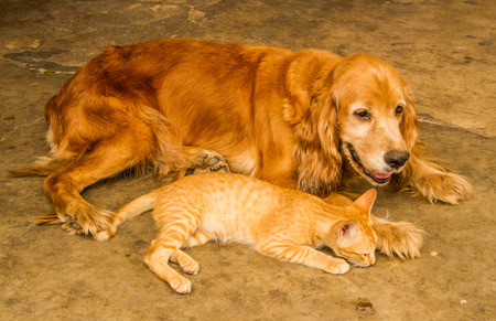 Cat take a rest with a dog . photo